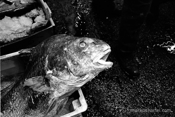 hartel-documentary-fulton-fishmarket-2