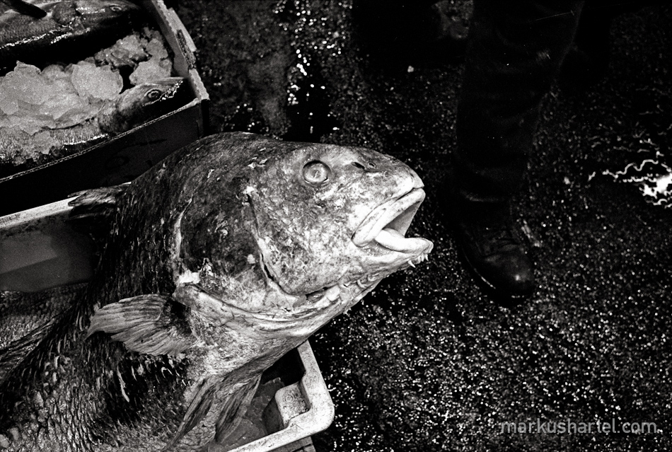 hartel-documentary-fulton-fishmarket-7