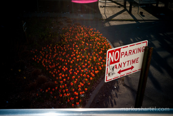 no parking anytime, red tulips